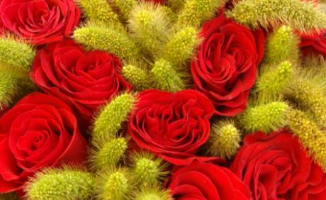 Blombergs Blomster